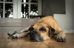 Een oude hond die voor het huis liggen Royalty-vrije Stock Afbeeldingen