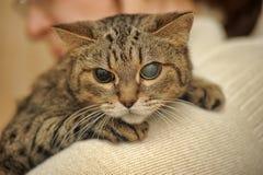 Een oude kat stock foto's