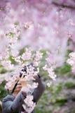 Een oude mens die een foto van Sakura nemen bloeit kersenbloesem royalty-vrije stock afbeelding