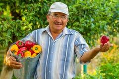 Een oude mens met een emmer groene paprika Stock Foto