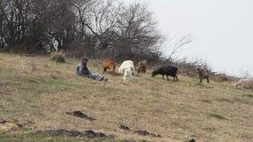 Een oude mens in slordige kleren zit op een heuvel en hoedt een troep van zijn eigen geiten tegen de achtergrond van vernietigd stock footage