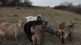 Een oude mens in slordige kleren zit op een heuvel en hoedt een troep van zijn eigen geiten tegen de achtergrond van vernietigd stock videobeelden