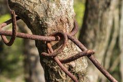 Een oude roestige kettingsomslagen rond de boomboomstam stock afbeelding