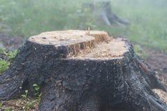 Een oude stomp in het bos Stock Foto's