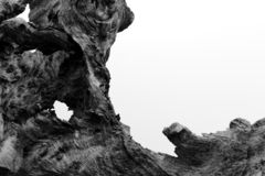 Een Oude Stomp van Wortel stock foto's