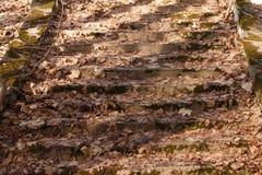 Een oude trap in het park, dat met droge bladeren wordt behandeld De lente in het park royalty-vrije stock afbeeldingen