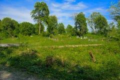 Een oude verlaten die begraafplaats, kruisen en graven met tal wordt overwoekerd royalty-vrije stock foto's