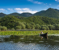 Een oude visser vangt een vis netto van de boot Royalty-vrije Stock Afbeelding