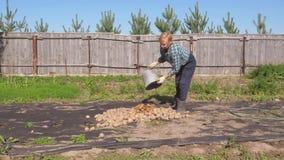 Een Oude Vrouw in de Tuin die van een Emmer van Hoopaardappels uitgieten stock videobeelden
