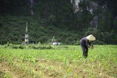 Oude graven in Vietnam 2 stock foto's
