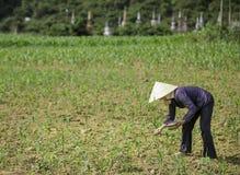 Oude graven in Vietnam 3 stock fotografie