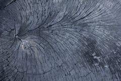 Een oude zwarte besnoeiing van een boom met barsten Natuurlijke houten oppervlaktetextuur stock fotografie