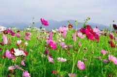 Een overzees van bloemen Royalty-vrije Stock Fotografie