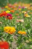 Een overzees van bloemen Royalty-vrije Stock Foto's