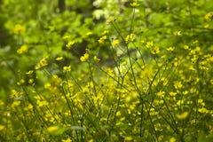Een Overzees van Gele Bloemen Royalty-vrije Stock Afbeeldingen