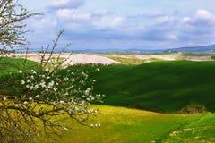 Een overzicht van de Sienese-heuvels Royalty-vrije Stock Afbeelding