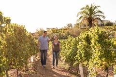 Een paar die door de wijngaarden lopen Royalty-vrije Stock Afbeelding