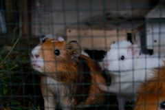 Een paar leuke kleine aanbiddelijke konijnen stock foto's