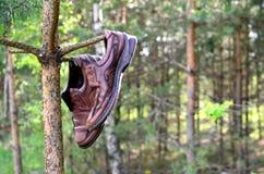 Een paar man schoenen die op een boom in het bos hangen royalty-vrije stock fotografie