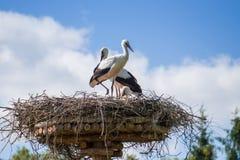 Een paar ooievaars die die in het nest zitten in het park in summe wordt geplaatst stock afbeelding