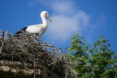 Een paar ooievaars die die in het nest zitten in het park in summe wordt geplaatst royalty-vrije stock afbeelding