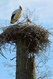 Een paar ooievaars in het nest Royalty-vrije Stock Fotografie