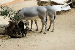 Een paar paarden Stock Afbeelding