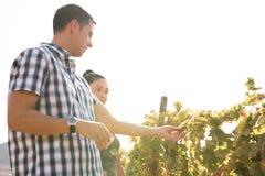 Een paar uit op een zonnige dag in de wijngaarden Royalty-vrije Stock Afbeelding