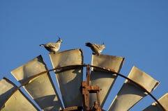 Een paar van kuifduif op windmolen stock foto