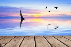 Een paar vogels Stock Foto
