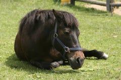 Een paard Royalty-vrije Stock Fotografie