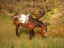 Een paard Royalty-vrije Stock Afbeelding