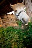 Een paard Stock Fotografie
