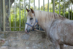 Een paard aan de omheining wordt gebonden die Royalty-vrije Stock Fotografie