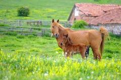 Een paard bekijkt een veulen in een weide 2 royalty-vrije stock afbeelding