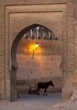 Een paard bevindt zich binnen één van de ingangen in medina van Fez in Marokko Royalty-vrije Stock Fotografie