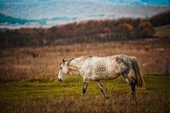 Een paard bevindt zich op een gebied tegen een achtergrond van hout stock afbeelding