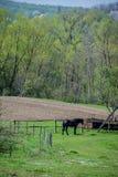 Een paard bij de omheining in dorp royalty-vrije stock afbeeldingen