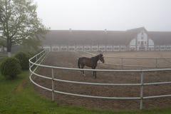 Een paard bij oude stallen die in de mist lopen Stock Afbeelding