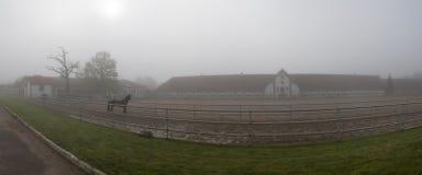 Een paard bij stallen die zich in de mist bevinden Stock Foto's