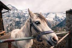 Een Paard in Corral - Murren, Zwitserland stock foto's