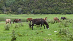 Een paard dat gras eet Stock Foto