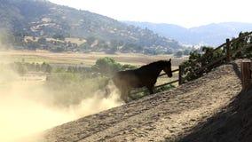 Een paard die in het vuil rollen stock videobeelden
