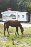 Een paard die naast de weg op de achtergrond van koffie weiden Royalty-vrije Stock Foto's