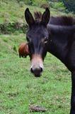Een paard die op u letten stock afbeelding
