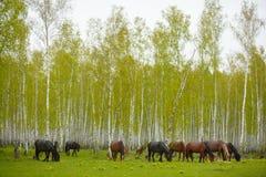 Een paard in een bosopen plek Een heldere de zomerfoto De aard van het dorp, Royalty-vrije Stock Foto's