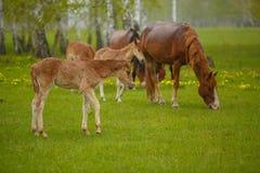 Een paard in een bosopen plek Een heldere de zomerfoto De aard van het dorp, Royalty-vrije Stock Afbeeldingen