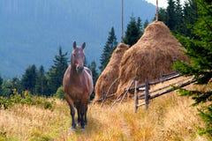 Een paard en een hooiberg stock afbeeldingen