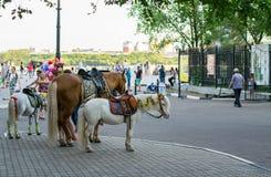 Een paard en twee poneys die op te berijden iemand wachten Royalty-vrije Stock Fotografie