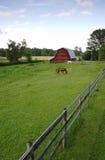 Een paard in het weiland. Stock Afbeeldingen